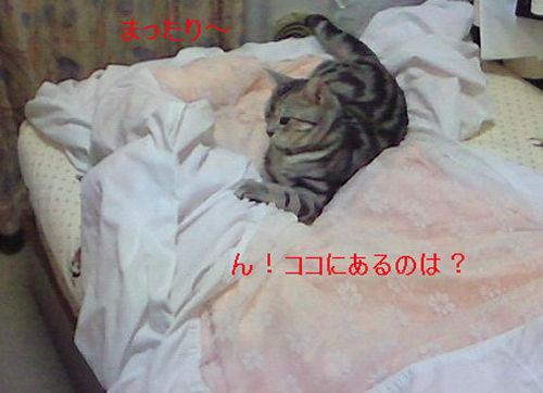 20080820-2.jpg