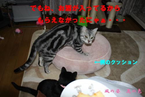 20090221-5のコピー.jpg