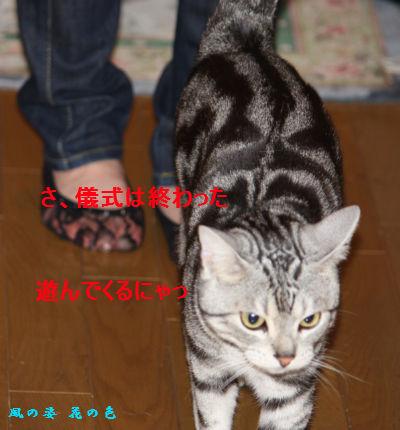 20090419-4.jpg