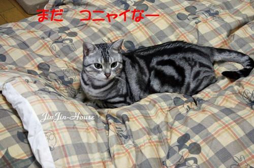 20101202-1.jpg