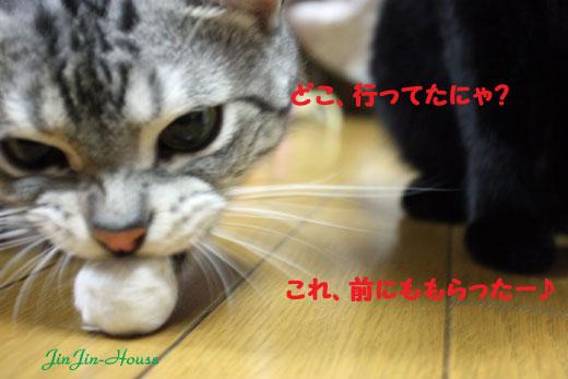 20110827-2.jpg