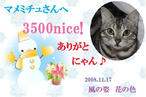 3500nice to mamemichu.jpg