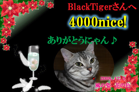 4000nice to blacktiger.jpg
