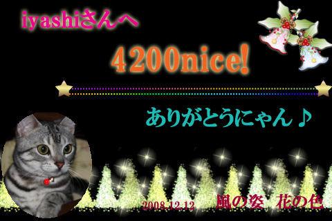 4200nice to iyashi.jpg