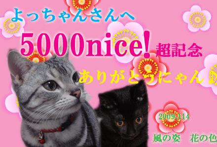 yocchannsanのコピー.jpg