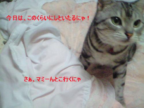 20080820-4.jpg