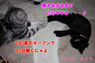 20090221-6のコピー.jpg