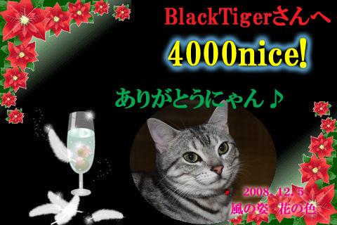 4000nice to blacktiger.jpg